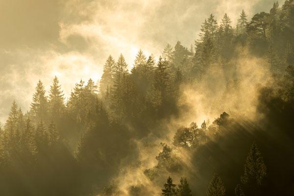 Nebelstimmung im Karwendel / Deutschland (Bildnummer 190815_5906)