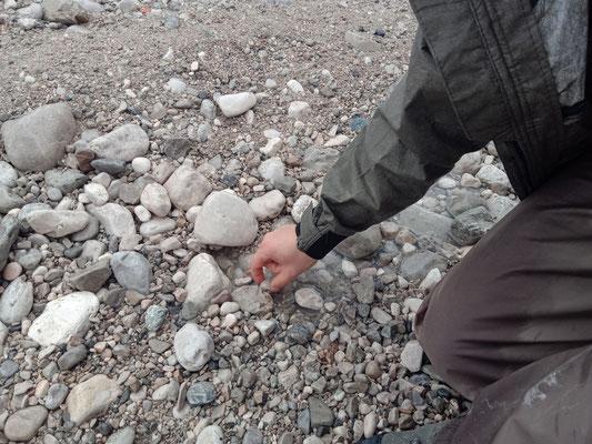 Zwischen den Steinen lebt(e) allerlei