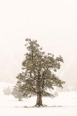 Wintereinbruch Ahornboden 1
