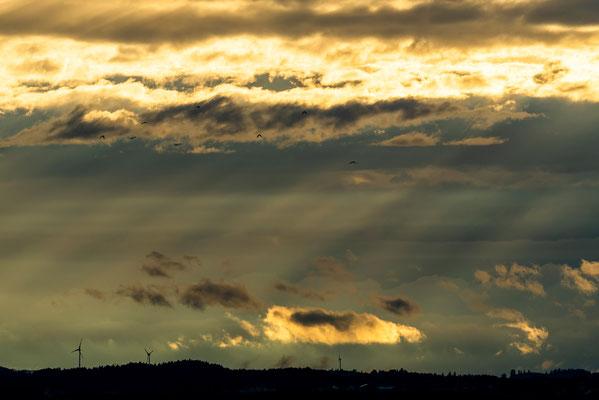 Sonnenlicht über dem Vorland