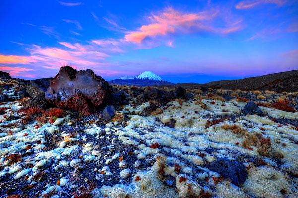 Lavabrocken und Flechten am Mt. Ngauruhoe Tongariro National Park / Neuseeland (Bildnummer 5427_28)