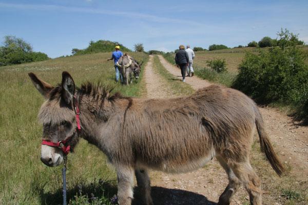 Eselwandern Eifel, Esel, Bauernhof, erleben, Natur, Entschleunigung