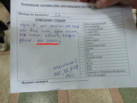 Эксперт: Каширин Николай, порода ротвейлер, 16.12.17, г.Таганрог
