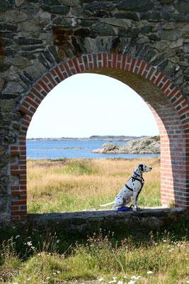 Aussicht mit Hund