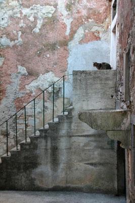 Katze erwartet Besuch