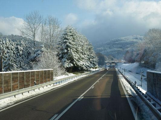 Sur la route, les sapins des Vosges enneigés