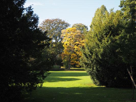 Ici, une promenade au Luisen Park de Mannheim.