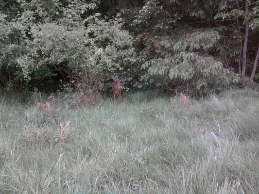 30.05.10 B - Wieder in Sicherheit in der Duhner Feldmark © FF-Duhnen