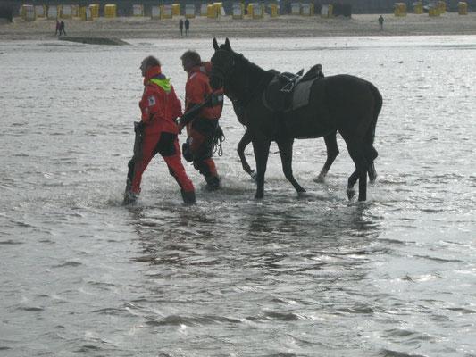 02.10.12 B - Beide Pferde erfolgreich gerettet © FF-Duhnen