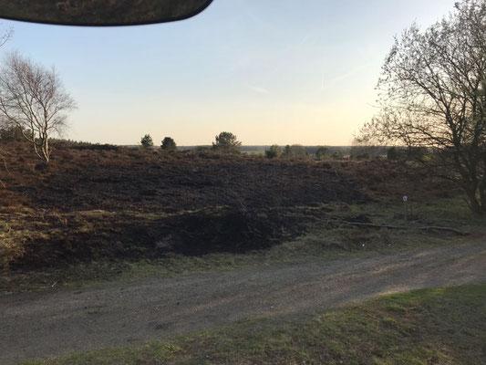Gut 600 m2 verbrannte Heidefläche © FF-Duhnen