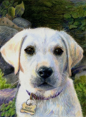 'Ebke, puppy guiddog', 2015; coloured pencil on paper, A4