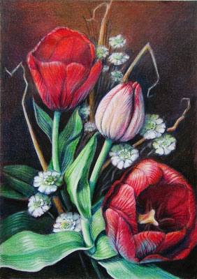 'Tulip', coloured pencil on paper,