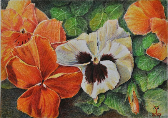 'Violets', coloured pencil on paper,
