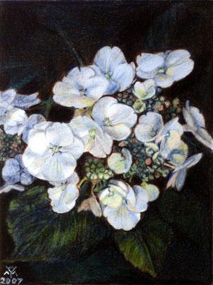Hortensia 2, acryl on panael, 50 x 46 cm (19.7 x 18.1 inch).