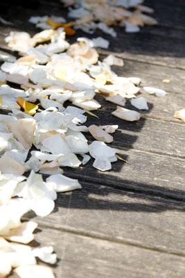 weiße Blütenblätter auf der Terrasse zur Freien Trauung