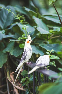 Vogel im Tropenhaus