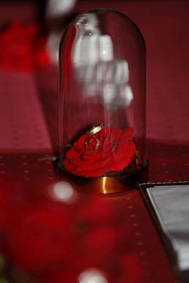 die Ringe liegen auf einer dunkelroten Rose unter einer Glasglocke
