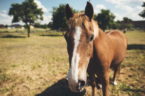 rustikale Hochzeit - dazu passt die Pferdekoppel direkt neben der Scheune perfekt