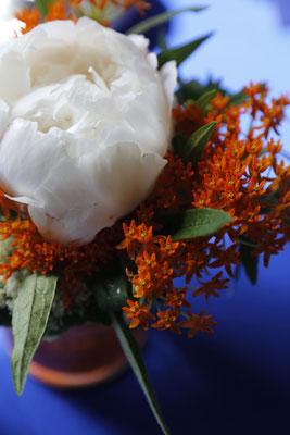 weiße Pfingstrosenblüte zu orange und blau