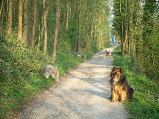 hundeschule-aargau-bilbo-sally-rohrdorf