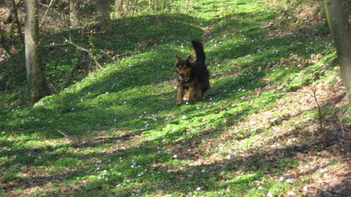 hundeschule-aargau-shandor-kirchdorf, Hundeschule, Hundetraining, Hundekurse, Hundeerziehung