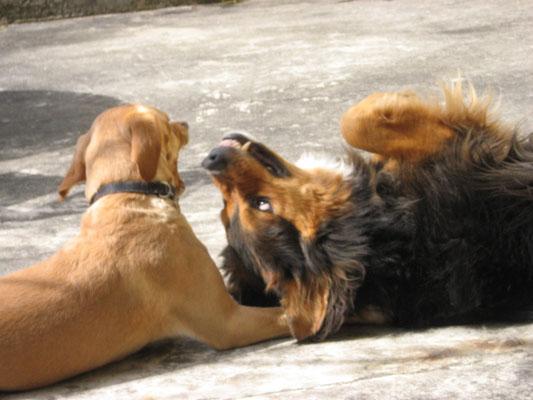 hundeschule-aargau-shandor-nussbaumen, Hundeschule, Hundetraining, Hundekurse, Hundeerziehung