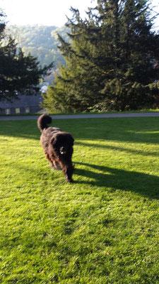 hundeschule-aargau-zorbas-baden, Hundeschule, Hundetraining, Hundekurse, Hundeerziehung