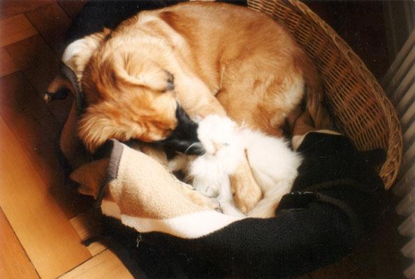 hundeschule-aargau-aisha-wettingen, Hundeschule, Hundetraining, Hundekurse, Hundeerziehung