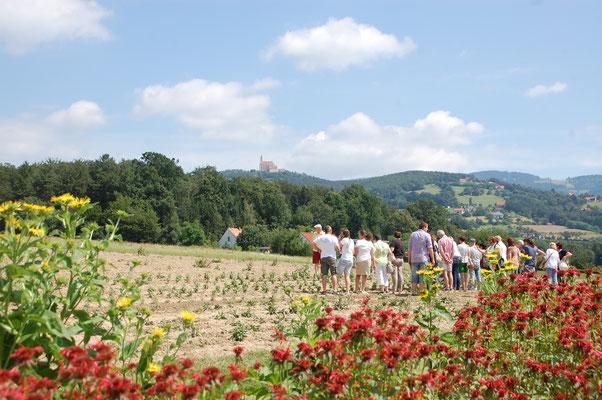 Die Kräuterregion unter der Kirche am Pöllauberg