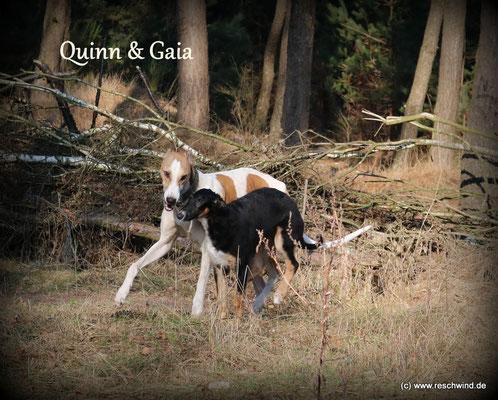 """Quinn muss mit dem """" Baby """" spiel und ......."""