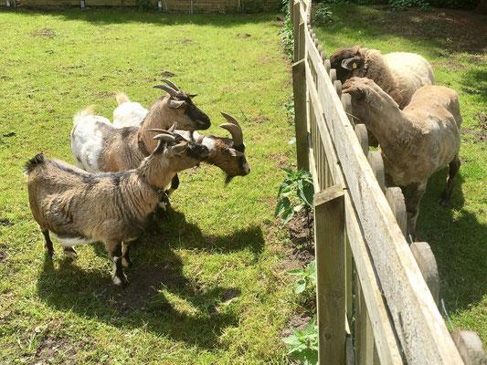 Die Neuen sind eingezogen und man bestaunt sich durch den Zaun