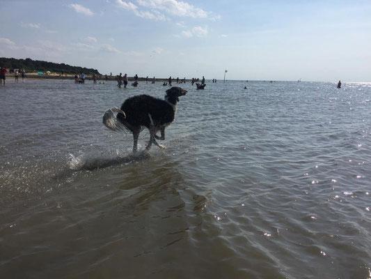 Resch Wind Exclusive Eddy hat das grosse Los gezogen und wohnt am Meer,