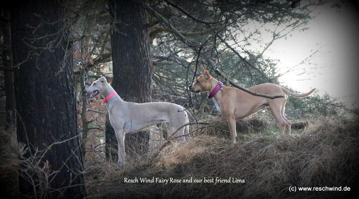 Rose und ihre Freundin lima