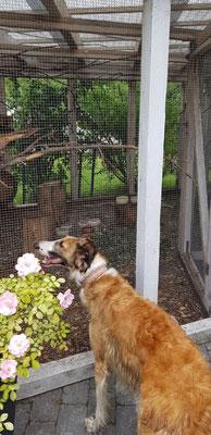Vajanna bestaunt die Eichhörnchen bei Freunden