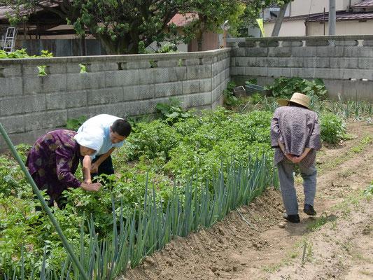収穫 & 何を植えるか検討して頂いています。