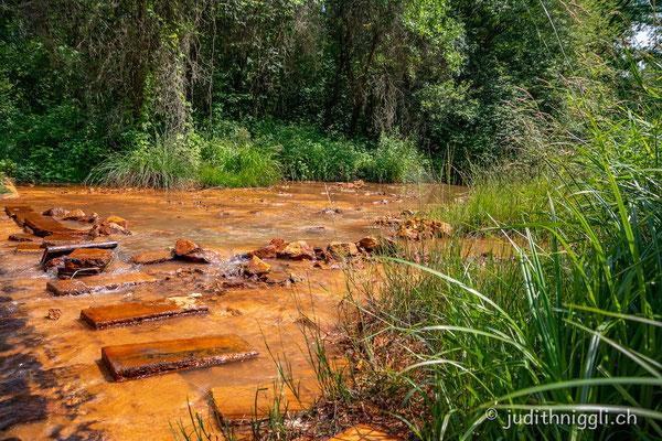 die Spree - einmal rein und klar - einmal vom Ocker braun gefärbt. Durch das Absenken des Grundwasserspiegels für den Braunkohleabbau, oxidiert das Eisen im Boden und wird ausgeschwemmt.