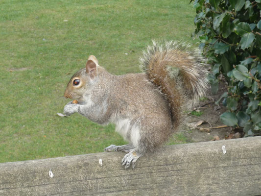 Money saving tips London - parks