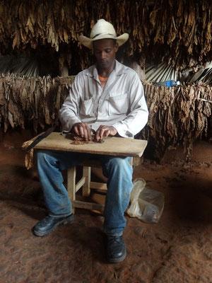 Tobacco grower Vinales Cuba