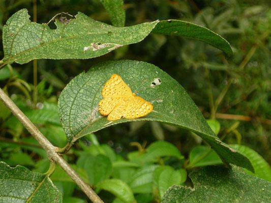 Iguazu Wasserfälle Tiere - Schmetterlinge