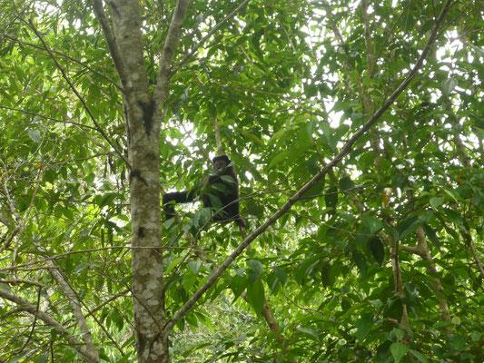 Iguazu Wasserfälle Tiere - Affen