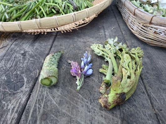 山菜(左から、ウド・山藤・タラの芽)