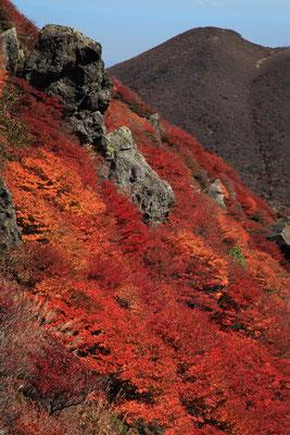 三俣山北峰直下の紅葉