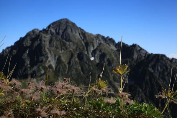 チングルマと剣岳