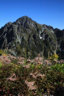 チングルマと剣岳  -縦ー