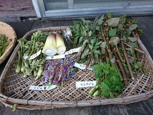 色々採れた山菜