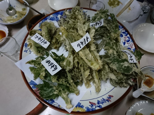 採れたての山菜の天ぷら