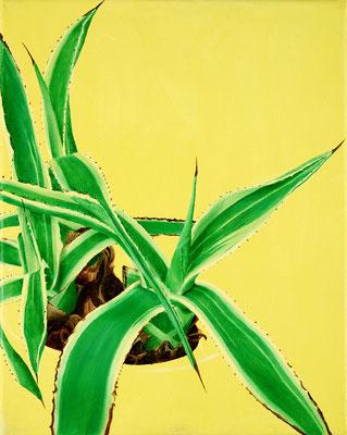 Sansevieria, oil on canvas, 30 x 24 cm
