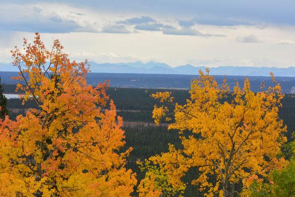 Herbstlandschaft am Richardson Highway