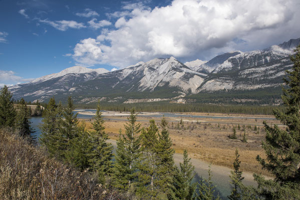 Athabaska River im Jasper Valley