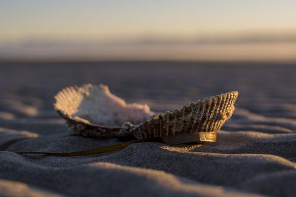 Muschel, Saragota Beach